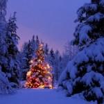 christmas-scene-2014