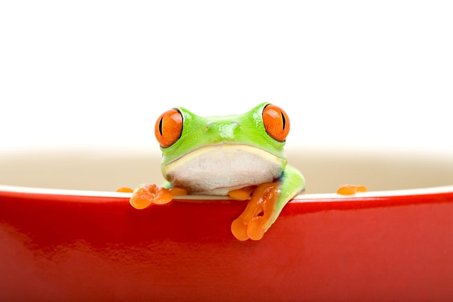 The Frog in the Pot Syndrome: When Your Nice Spouse Can Become Your Worst Nightmare